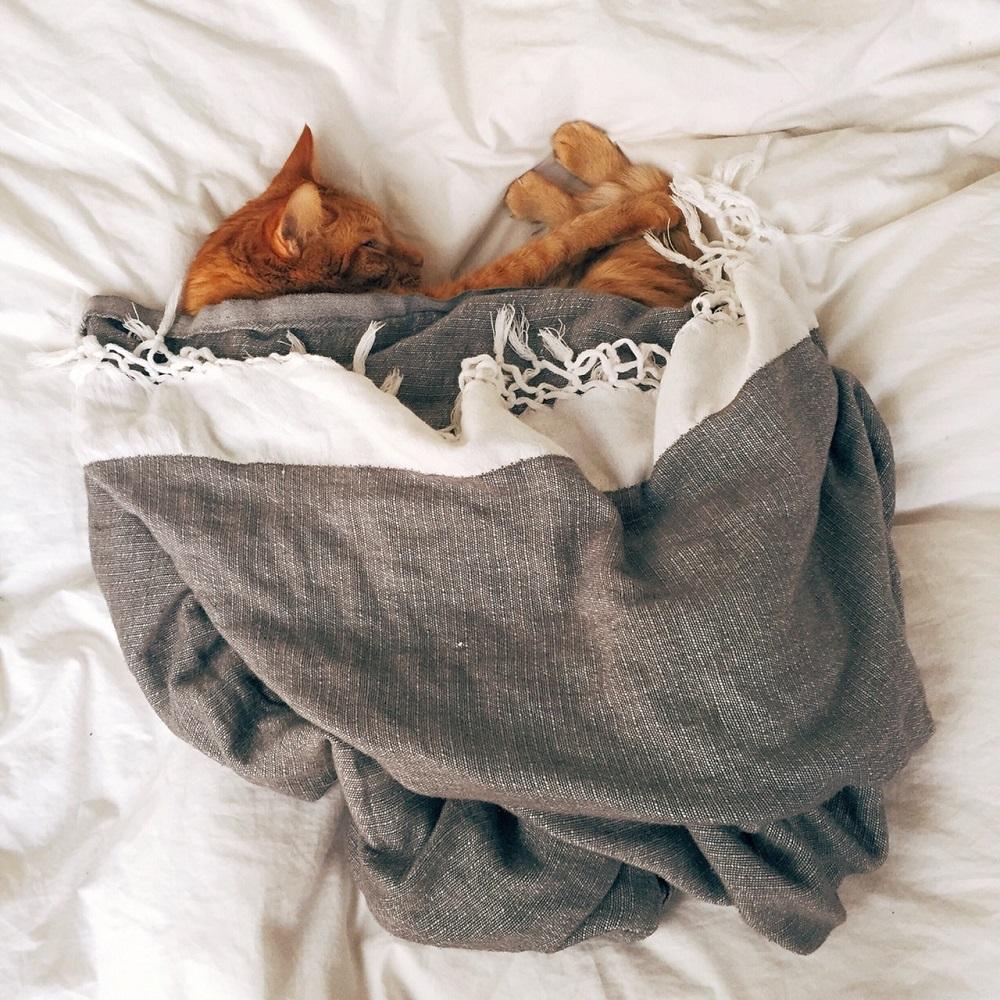 katten in slaapkamer