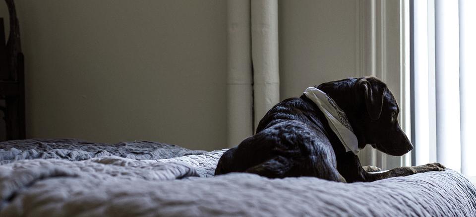 hond slapen slaapkamer