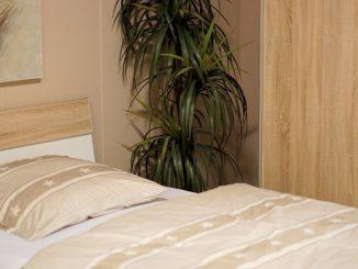 Welke planten in de slaapkamer?